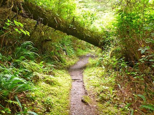 cape-scott-trail-2